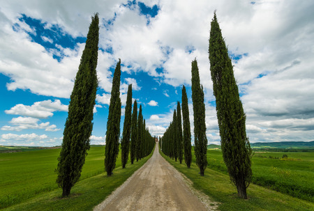 Val dOrcia, Italy - 1 May 2016 - The beautiful and very famous landscape of the Tuscany region, during the spring. All the places and landscapes of the Val dOrcia are protected by COPYRIGHT, following the recognition of the request of the town of San Qu Editorial