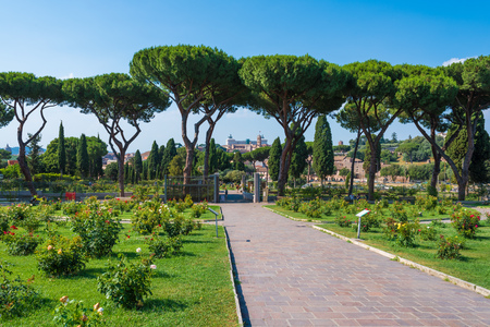Rome (Italy) - The touristic Municipal Roses, on the Aventino hill in the center of Rome; Open during the spring and summer, hosts many species of roses. Stock Photo - 80694244