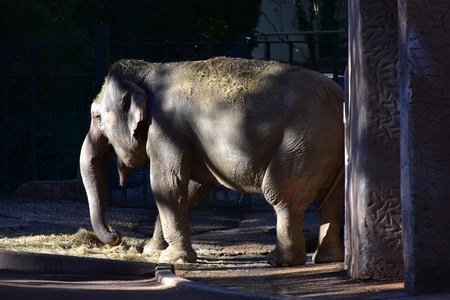 Rome, Italy - 27 October 2017 - The animals of Biopark, a zoological park in the heart of Rome in Villa Borghese. In this photo in particular: the elephant