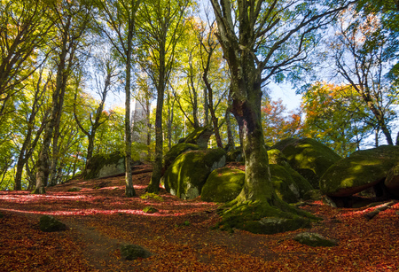 Soriano nel Cimino (Italy) - The autumn in the beechwood of Monte Cimino with foliage.