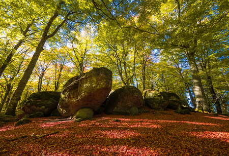Soriano nel Cimino (Italy) - The autumn in the beechwood of Monte Cimino with foliage. This forest in the summit of Cimino mountain has become UNESCO World Heritage Site in 2017