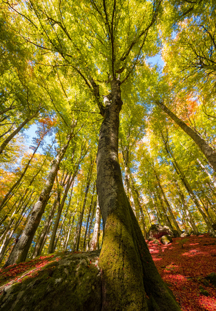 Soriano nel Cimino (Italy) - The autumn in the beechwood of Monte Cimino with foliage