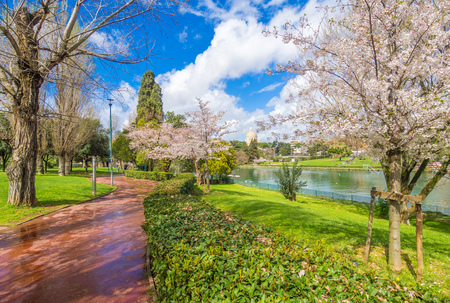 Rome, Italy - 31 March 2018 - The spring flowering of Japanese cherry trees, called Hanami, in the park of the EUR artificial lake, modern district in the south of Rome