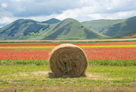 Castelluccio di Norcia, 2018 (Umbria, Italy) - The famous landscape flowering with many colors, in the highland of Sibillini Mountains, central Italy