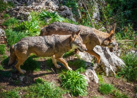 Nationalpark Abruzzen, Latium und Molise (Italien) - Der Herbst im italienischen Bergnaturschutzgebiet, mit wilden Tieren, kleinen alten Städten, dem Barrea-See.