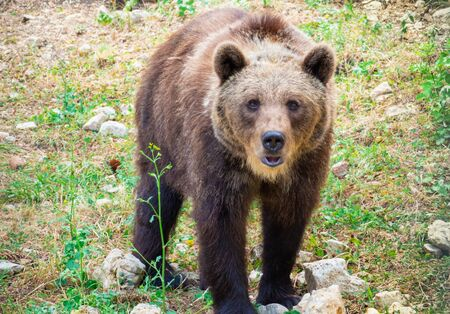 Majella National Park (Italy) - The summer in the Abruzzo mountain natural reserve, with marsican bear. 免版税图像