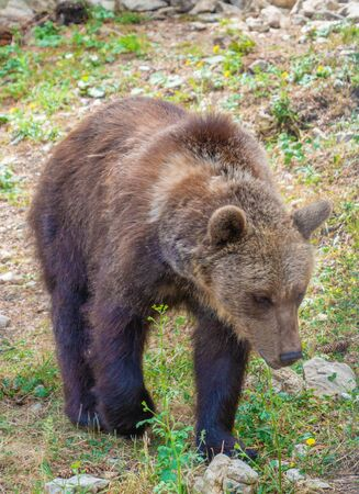 Majella National Park (Italy) - The summer in the Abruzzo mountain natural reserve, with marsican bear. Stock Photo