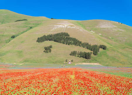 Castelluccio di Norcia, 2020 (Umbria, Italy) - The famous landscape flowering with many colors, in the highland of Sibillini Mountains, central Italy.