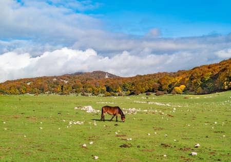 A horse on the Mount Zappi in Lazio region (Italy) Reklamní fotografie
