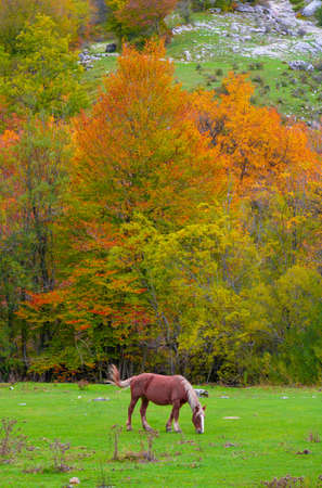 National Park of Abruzzo, Lazio and Molise (Italy) - The autumn with foliage in the mountain natural reserve