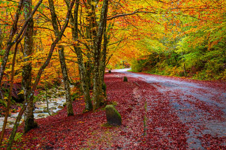 National Park of Abruzzo, Lazio and Molise (Italy) - The autumn with foliage in the mountain natural reserve.