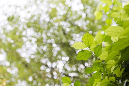 soften: leaves and sun light