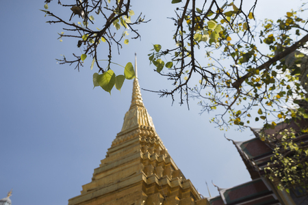 kaew: leaves and golden temple in wat phra kaew in bangkok,Thaliand,selective focus at leaves Stock Photo