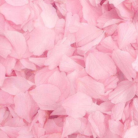 花びらの花びらピンクの花の葉