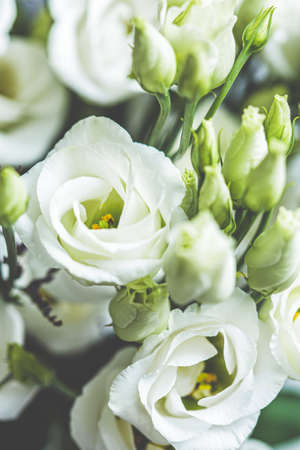 Fresh flowers eustoma bouquet, close up. 免版税图像