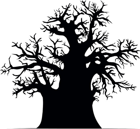 adansonia: Baobab tree
