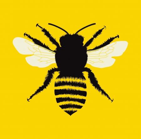 꿀벌 일러스트
