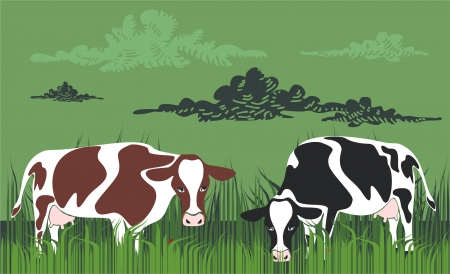 domestic scene: Cows grazing in meadow Illustration