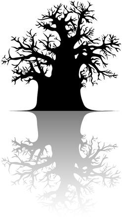 Baobab tree  Vector