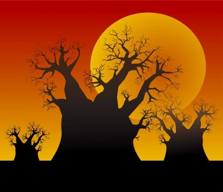 baobab: Sunset and baobab trees  Illustration