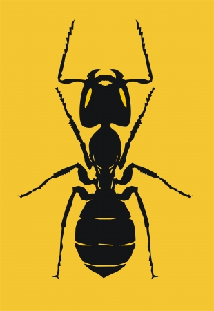 illustration of ant  Vector