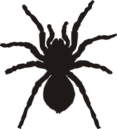 Tarantula silueta Ilustración de vector