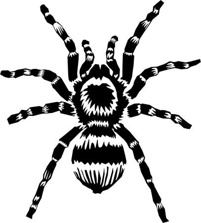 タランチュラのクモ  イラスト・ベクター素材
