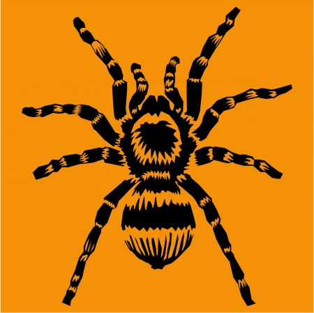 Tarantula  Stock Vector - 17443558