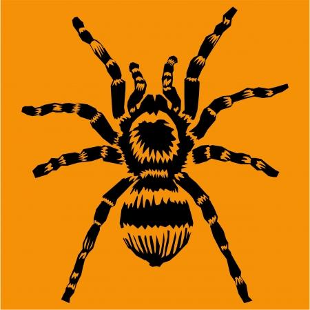 arachnophobia: Tarantula