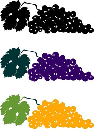 raceme: Grapes