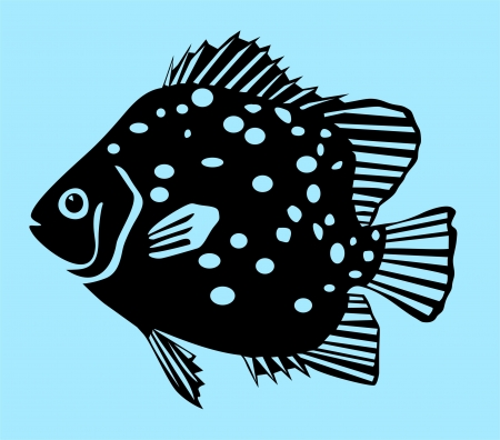 Spotted Scat Fish Vector