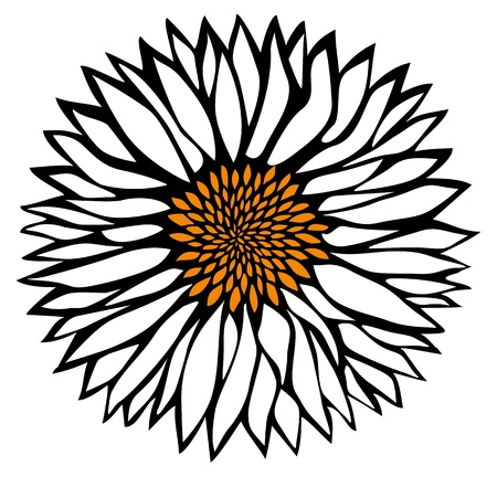 daisyflower:  Daisy flower