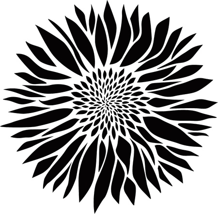 margerite: Flower - vector