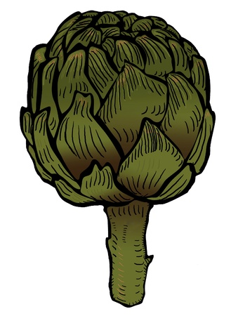 artichoke: Artichoke  Stock Photo