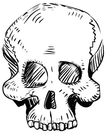 Human skull Stock Vector - 19443311