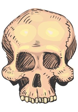 Human skull Stock Vector - 19443314