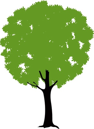 Green tree Stock Vector - 19443326