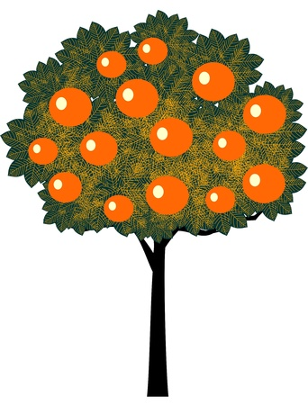 prolific: Orange tree