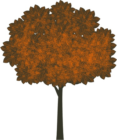 sycamore: Autumn tree  Illustration
