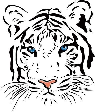 White tiger Vettoriali