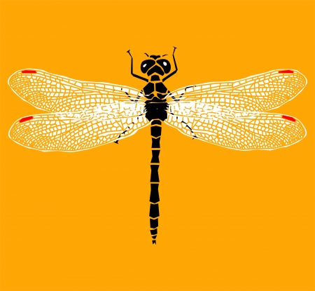 dragonfly wing: Vector dragonfly
