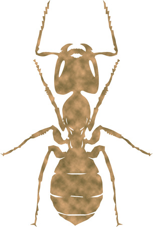 anthill:  Ant Stock Photo