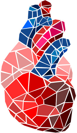 human health: Coraz�n humano
