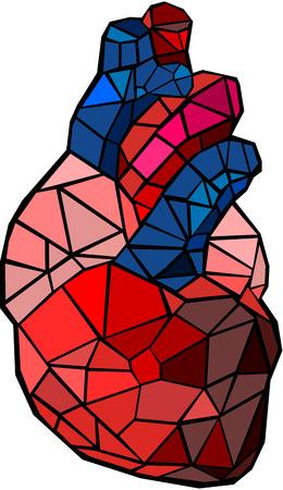 Human heart Imagens - 23684703