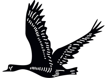 canada goose: Canada goose silhouette  Illustration
