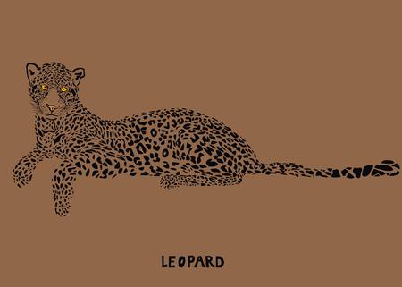 lie down: Leopard - vector illustration  Illustration