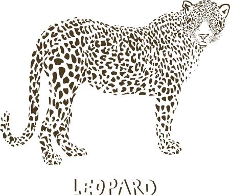 Leopard - vector illustration  Vector