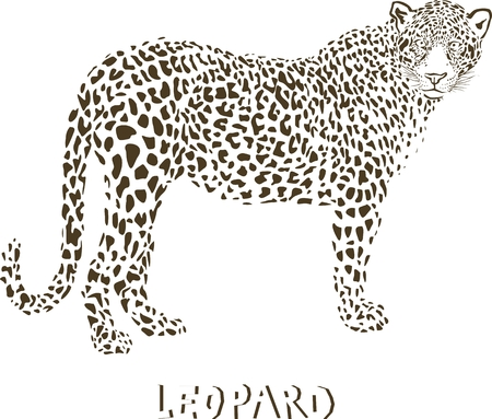 royal safari: Leopard - vector illustration  Illustration