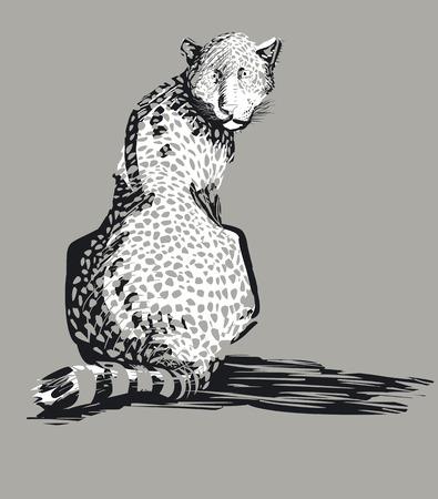 Leopard, vector illustration Vector