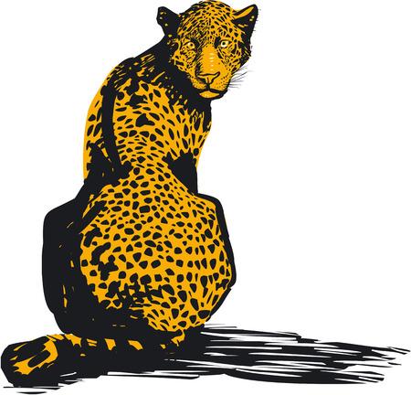cola mujer: Leopard, ilustración vectorial Vectores